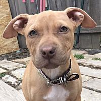 Adopt A Pet :: Hazel - Cheney, KS