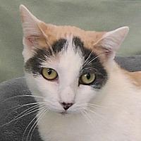 Adopt A Pet :: Chloe - Redondo Beach, CA
