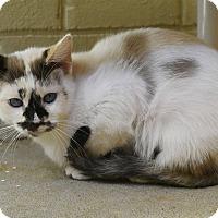 Adopt A Pet :: Blue - Homewood, AL