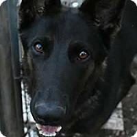 Adopt A Pet :: Luna - Jarrell, TX