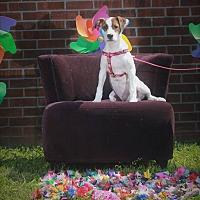 Adopt A Pet :: Lemoncake - Carlisle, TN
