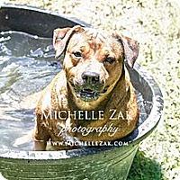 Adopt A Pet :: Omarita - Miami, FL