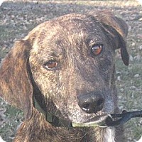 Adopt A Pet :: Rye - Jacksonville, FL