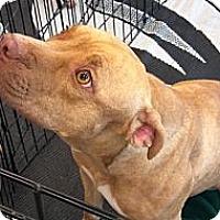 Adopt A Pet :: Paisley - Phoenix, AZ