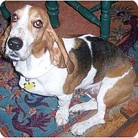 Adopt A Pet :: Ishtar - Phoenix, AZ