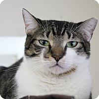 Adopt A Pet :: Saxophone - Chicago, IL