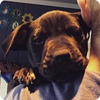 Adopt A Pet :: Frankie - North Brunswick, NJ
