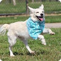 Adopt A Pet :: Finley - Santa Fe, TX