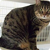 Adopt A Pet :: Sonic - Shelby, NC