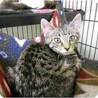 Adopt A Pet :: Cashew - Milwaukee, WI