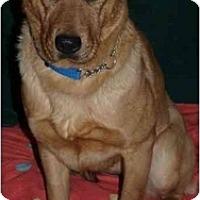 Adopt A Pet :: Rosebud - Toronto/Etobicoke/GTA, ON