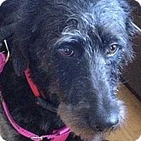 Adopt A Pet :: Cooper - Denver, CO