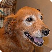 Adopt A Pet :: Ruby - Danbury, CT