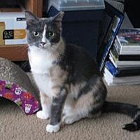 Adopt A Pet :: KATIE - Hamilton, NJ