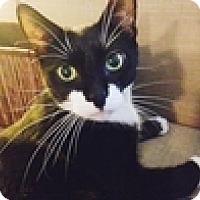 Adopt A Pet :: Dinah - Vancouver, BC