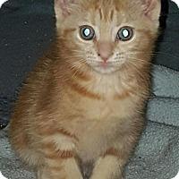 Adopt A Pet :: Hailey - Sunderland, ON