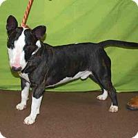 Adopt A Pet :: ROCKO - Louisville, KY