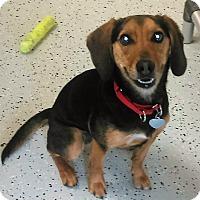 Adopt A Pet :: Mia - Burgaw, NC