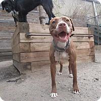 Adopt A Pet :: Amber Tamblyn - Jersey City, NJ