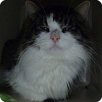 Adopt A Pet :: Chico - Hamburg, NY