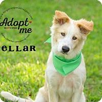Adopt A Pet :: Kellar - Pearland, TX