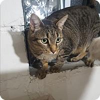 Adopt A Pet :: Morris - Port Huron, MI