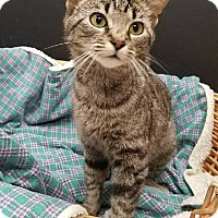 Adopt A Pet :: Allison - Decatur, AL