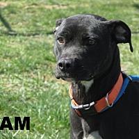 Adopt A Pet :: Sam - Richfield, WI