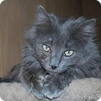 Adopt A Pet :: Sproket - Prescott, AZ
