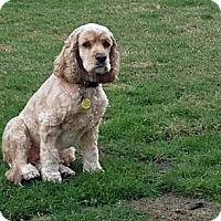 Adopt A Pet :: Nala - Surrey, BC