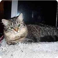 Adopt A Pet :: Abby & Brandy - Portland, ME