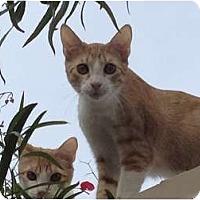 Adopt A Pet :: Rex - Scottsdale, AZ