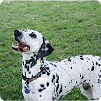Adopt A Pet :: Shot Glass (Shooter) - Newcastle, OK