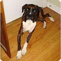 Adopt A Pet :: Izzie - Albany, GA