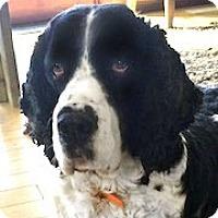 Adopt A Pet :: Bud - Minneapolis, MN
