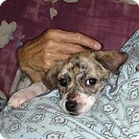 Adopt A Pet :: Trudi - Ruskin, FL