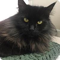 Adopt A Pet :: Hannah - Cumming, GA