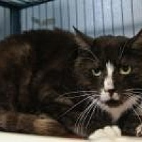 Adopt A Pet :: Spot - New Milford, CT