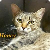 Adopt A Pet :: Honey - El Cajon, CA