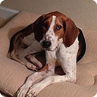 Adopt A Pet :: Paulie - Tallahassee, FL