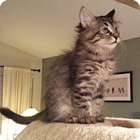Adopt A Pet :: Valeera - Irvine, CA