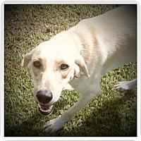Adopt A Pet :: AVA - Medford, WI