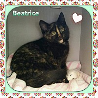 Adopt A Pet :: Beatrice - Atco, NJ