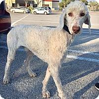 Adopt A Pet :: Titan - St. Petersburg, FL