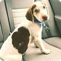 Adopt A Pet :: Elvis - Marlton, NJ