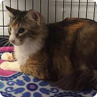 Adopt A Pet :: Cleo - Joplin, MO