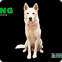 Adopt A Pet :: King - San Angelo, TX