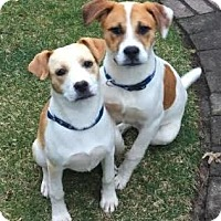 Adopt A Pet :: Baxter and Bailey - Toms River, NJ