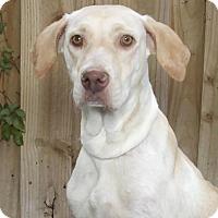 Adopt A Pet :: Lacy - oakland park, FL