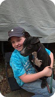 Labrador Retriever Mix Dog for adoption in North Brunswick, New Jersey - Lissi